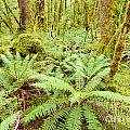 Virgin Rainforest Wilderness Of Fiordland Np Nz by Stephan Pietzko