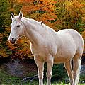 White Horse In Autumn by Brian Jannsen