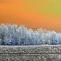 Winter Woods by J McCombie