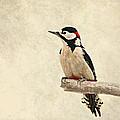 Woodpecker by Heike Hultsch