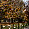 40 Maples by Anthony Thomas