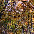 Fall Leaves  by Patrick  Warneka