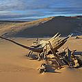 Silver Lake Sand Dunes by Dean Pennala