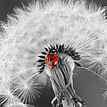 Ladybug by Heike Hultsch