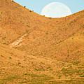 Usa, New Mexico, Bosque Del Apache by Jaynes Gallery
