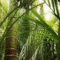 Jungle by Les Cunliffe
