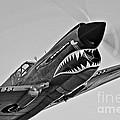 A Curtiss P-40e Warhawk In Flight by Scott Germain