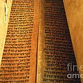 Ancient Torah Scrolls From Yemen  by Shay Fogelman