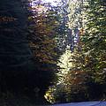 Autumn 4 by J D Owen