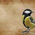 Bird by Heike Hultsch