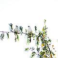 Birds by Anusha Hewage