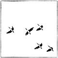 5 Birds by Stefan Nielsen