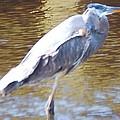 Blue Heron by Robert Floyd