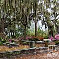 Bonaventure Cemetery Savannah Georgia by Dawna Moore Photography