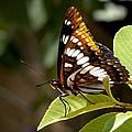 Butterfly by Betty Depee