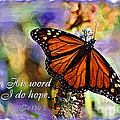 Butterfly Scripture by Jill Lang