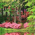 Callaway Gardens by Mountains to the Sea Photo