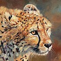 Cheetah by David Stribbling