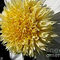 Dahlia Named Platinum Blonde by J McCombie