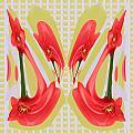 Dancing Tulip Red Exotic Flower Petal Based Wave Pattern  Created By Navinjoshi Reiki Healing Master by Navin Joshi