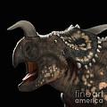 Dinosaur Einiosaurus by Science Picture Co