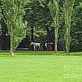English Garden Munich Germany by Howard Stapleton