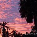 Florida Sunset by Allan  Hughes