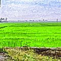 Green Fields With Birds by Ashish Agarwal