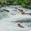 5 Grizzlies by Joan Wallner