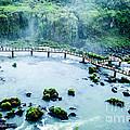 Iguassu Falls In Brazil by Mariusz Prusaczyk