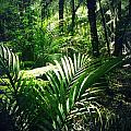 Jungle Leaves by Les Cunliffe