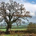 Lower Bruckland - Devon by Susie Peek