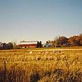 Michigan Barn by Robert Floyd