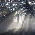 Morning Mist by Sarka Olehlova