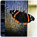 Phoenician Butterfly by Natasha Marco