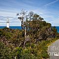 Point  Hicks Lighthouse by Alexander Whadcoat
