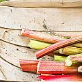 Rhubarb by Tom Gowanlock
