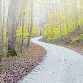 Road Passing Through A Forest by Panoramic Images