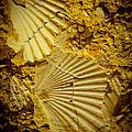 Seashell In Stone by Raimond Klavins