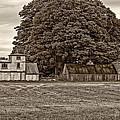 5 Star Barns Monochrome by Steve Harrington