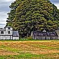 5 Star Barns by Steve Harrington