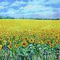 Sunflower Field Under Blue Skies by Shan Ungar