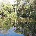 Swamp Reflection by Christiane Schulze Art And Photography