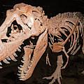 Tyrannosaurus Rex by Millard H Sharp