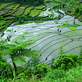 Unesco World Heritage Site, Rice by Michael Runkel