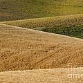 Wheat Field by John Shaw