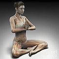 Yoga Meditation Pose by Science Picture Co