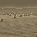 50 Shades Of Hay by Bob Geary