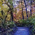 A Path In The Woods by Patrick  Warneka