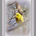 5393-006 - Pine Warbler-fb by Travis Truelove